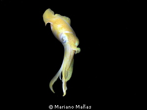 squid at night by Mariano Mañas